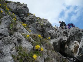 Blumen am Klettersteig