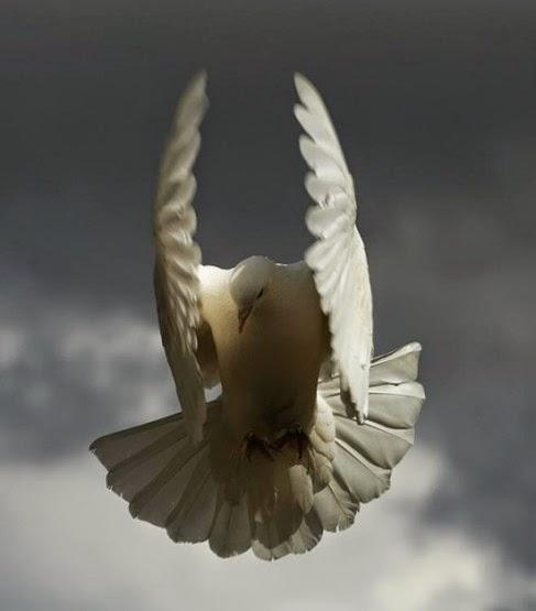 Burung Merpati Jadi Model