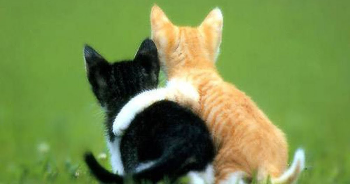 Cara Membasmi Kutu Pinjal Kucing Dc