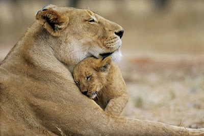 Animal mother love