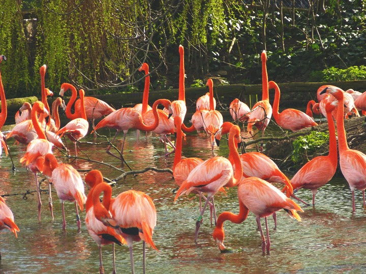 pretty pink flamingoes