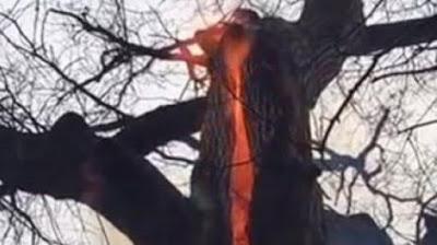 Inilah Pohon Setan yang Menyala di Bagian Dalamnya