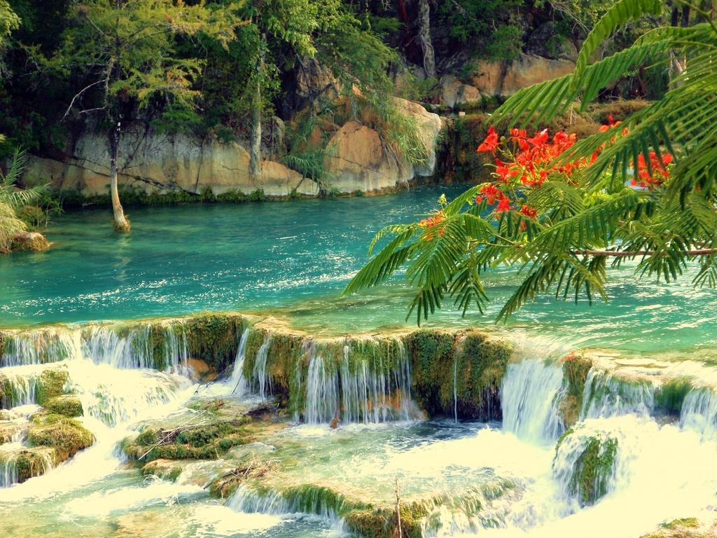 Arte y jardiner a cascadas construcci n de una cascada for Estanques naturales
