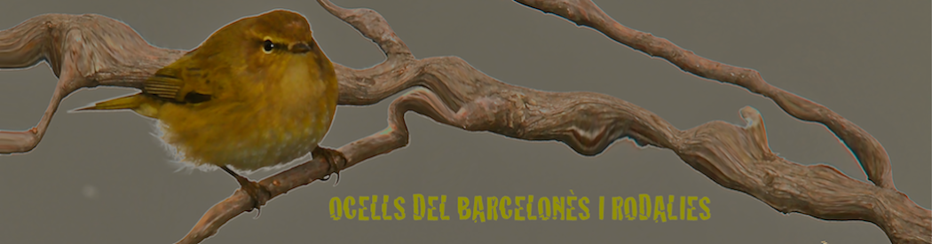 Ocells del Barcelons i rodalies