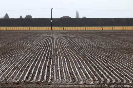 Newly drilled crop on Sears Rd, Meeanee, Napier. photograph