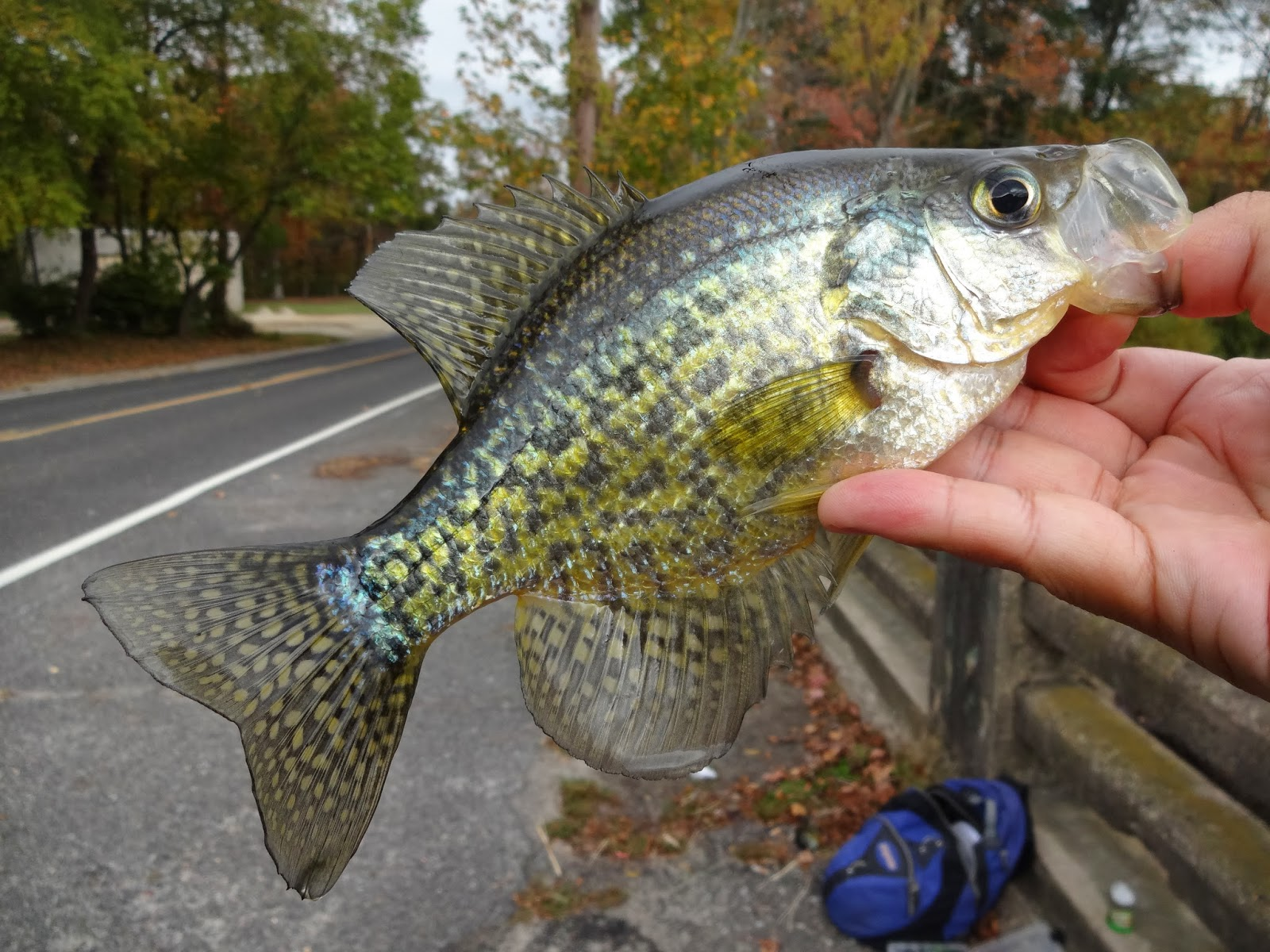 Extreme philly fishing october fishing sessions last for Crappie fishing with minnows