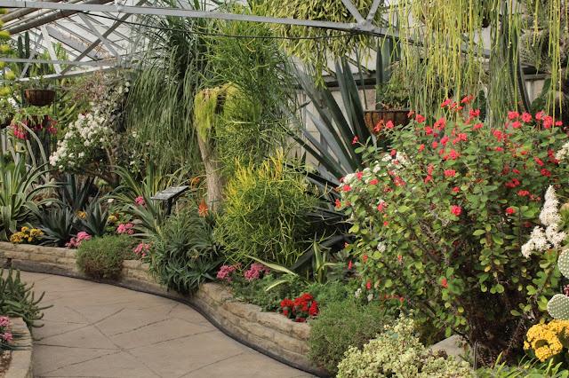 cacti at Allan gardens