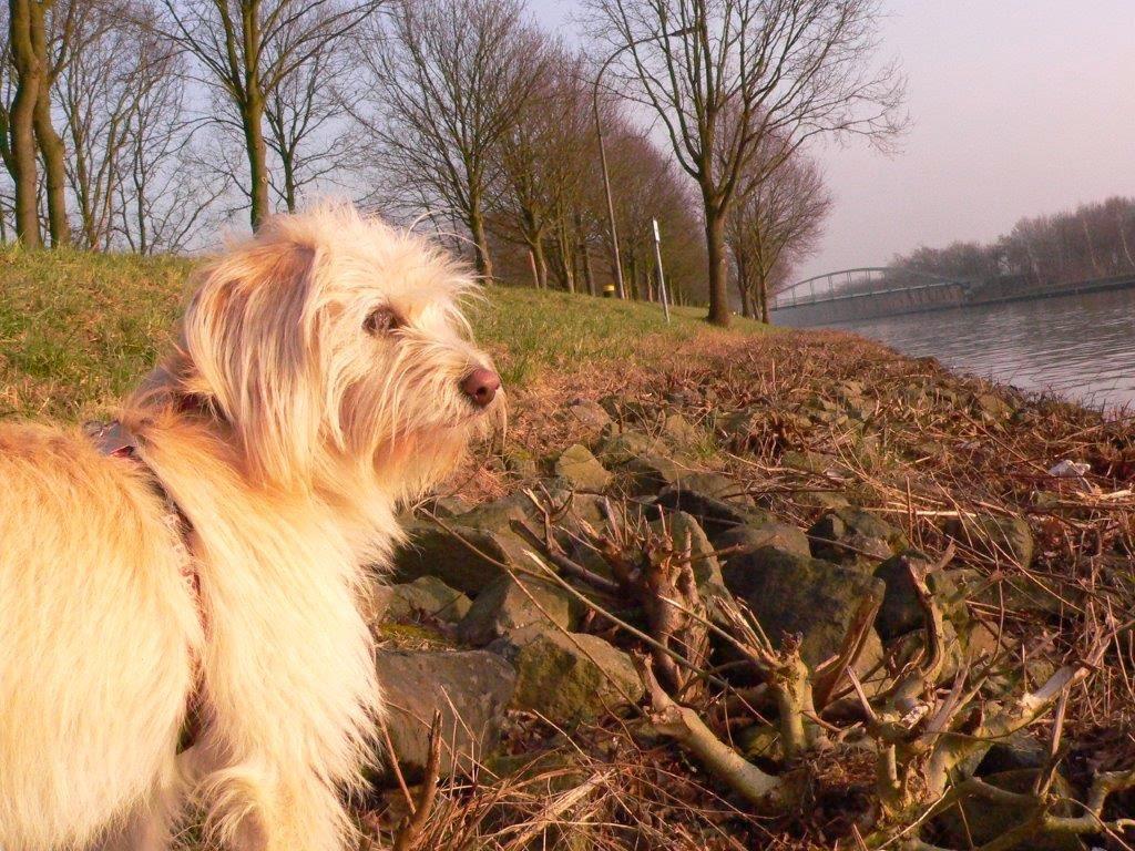 Mina Hund Hunderunde Brücke Wasser Entspannung Frühling