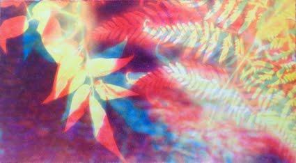 RAINFOREST GLOW<br>9 x 5 Exhibition