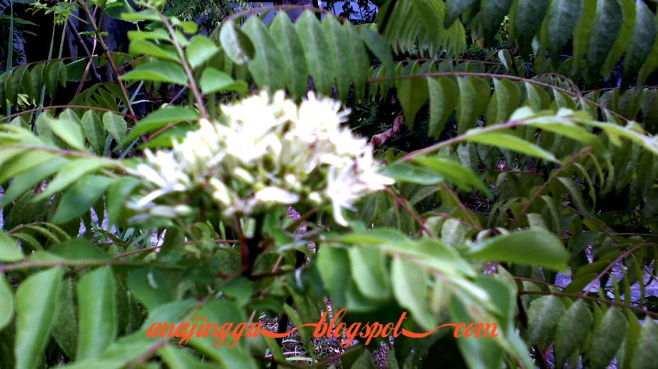 Bunga bunga herba