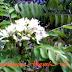 Bunga-bunga herba