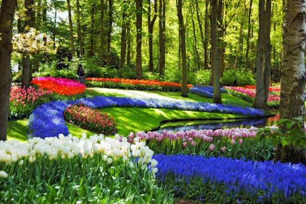 Paradisul Verde Parcul Keukenhof Din Olanda