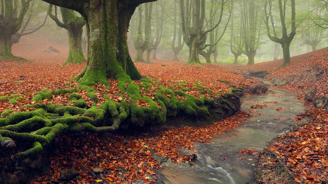 http://4.bp.blogspot.com/-QOGEdyCssmU/ULccdE9H0pI/AAAAAAAAEXc/ZTbLP0lVg3U/s1600/Moss-covered_tree_roots_Gorbea_Natural_Park_Basque_Country_Spain_20121129.jpg