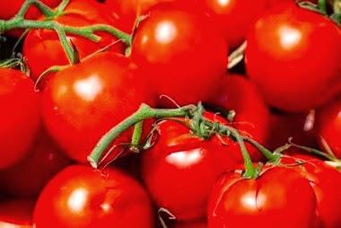 Ojardin la culture des tomates - Quand planter les tomates cerises ...