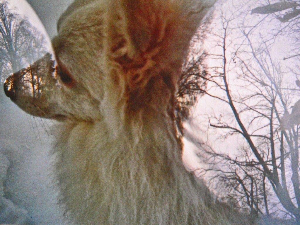 Hund Schnee Bäume Analog Foto