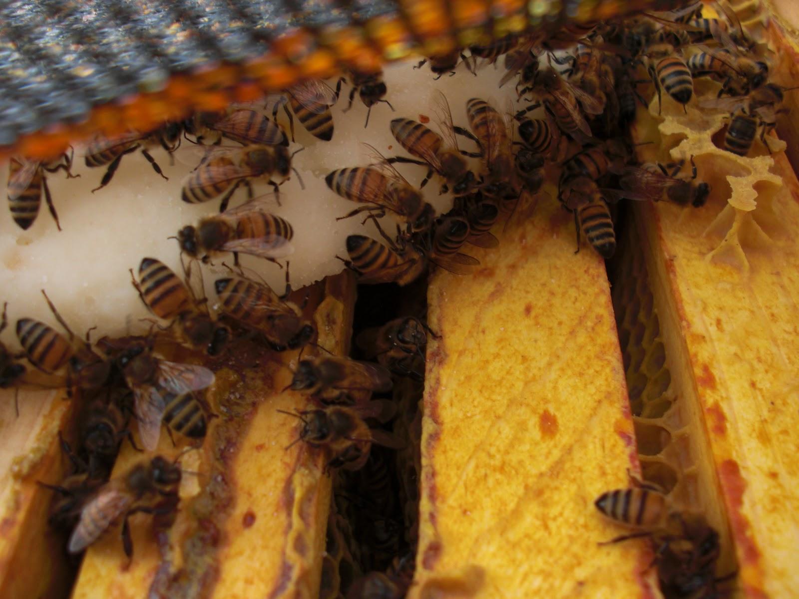backyard bee hive blog october 2012