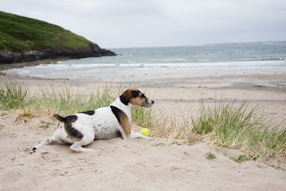 pet friendly drug rehab, relax comfortable detox, medical detox bring your pet to the beach