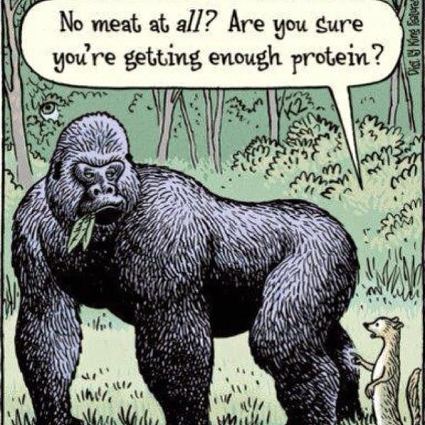 Mito proteina