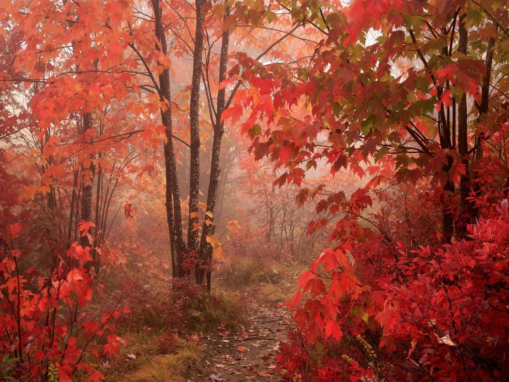 ... picture beautiful red forest background wallpaper for laptop desktop