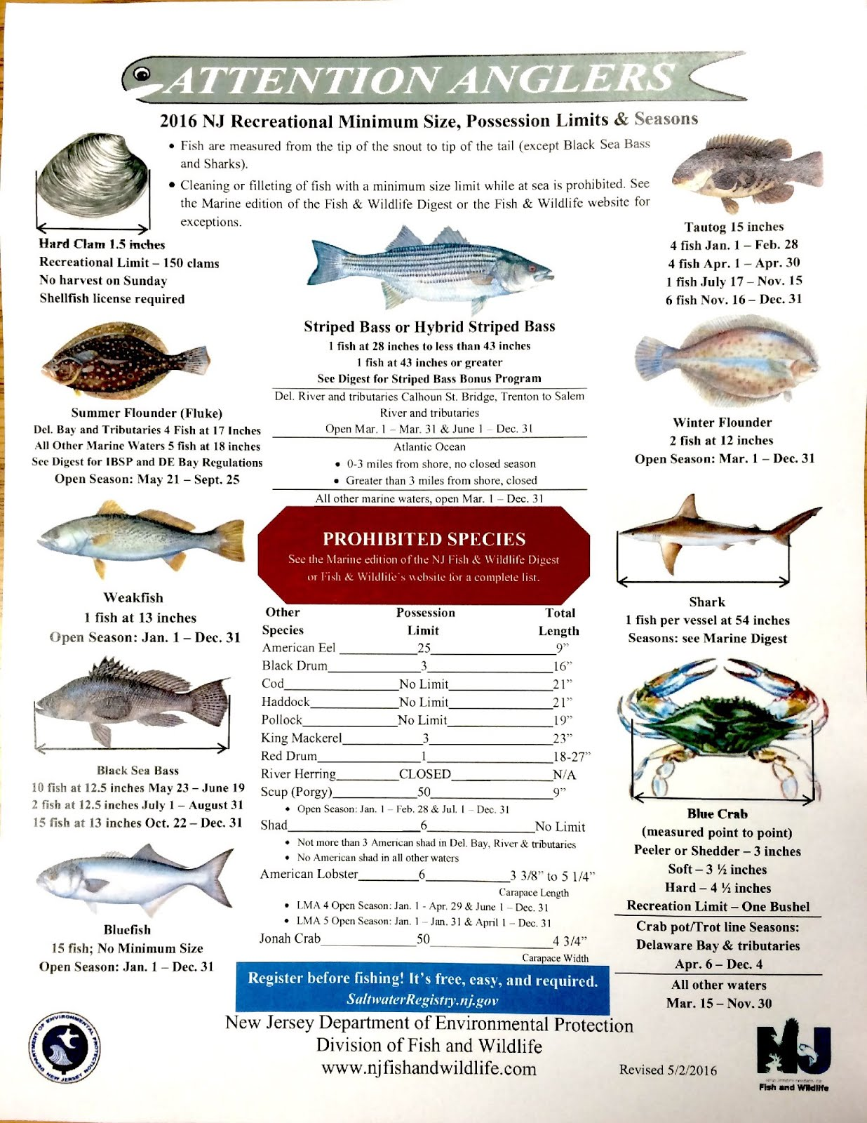 Jersey cape guide service new jersey saltwater fishing for Nj saltwater fishing regulations