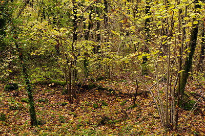 Image of november autumn colors in the forest