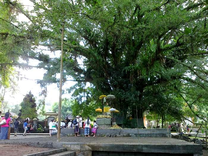 Tirta Empul Tree
