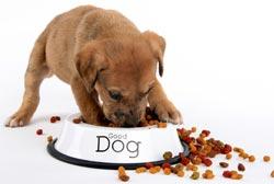 Cách cho ăn phù hợp với vật nuôi rất quan trọng.