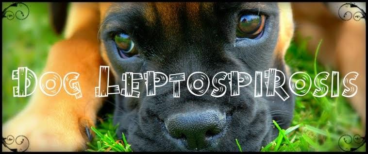 Dog Leptospirosis