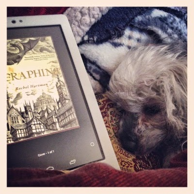Murchie lays beneath a fuzzy, blue and white blanket with only his head and front paws peeking out. Beside him is a white Kobo with Seraphina's cover art on its screen. The cover is a brown-tinged woodcut of a dragon flying over a medievalesque city.