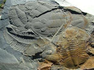 Fósseis de trilobites em Arouca