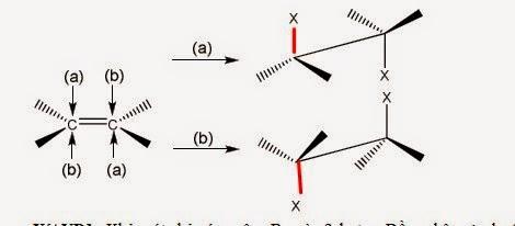 Hóa học lập thể pứ cộng halogen