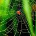 Örümcek Ağının Sırrı Çözüldü mü?