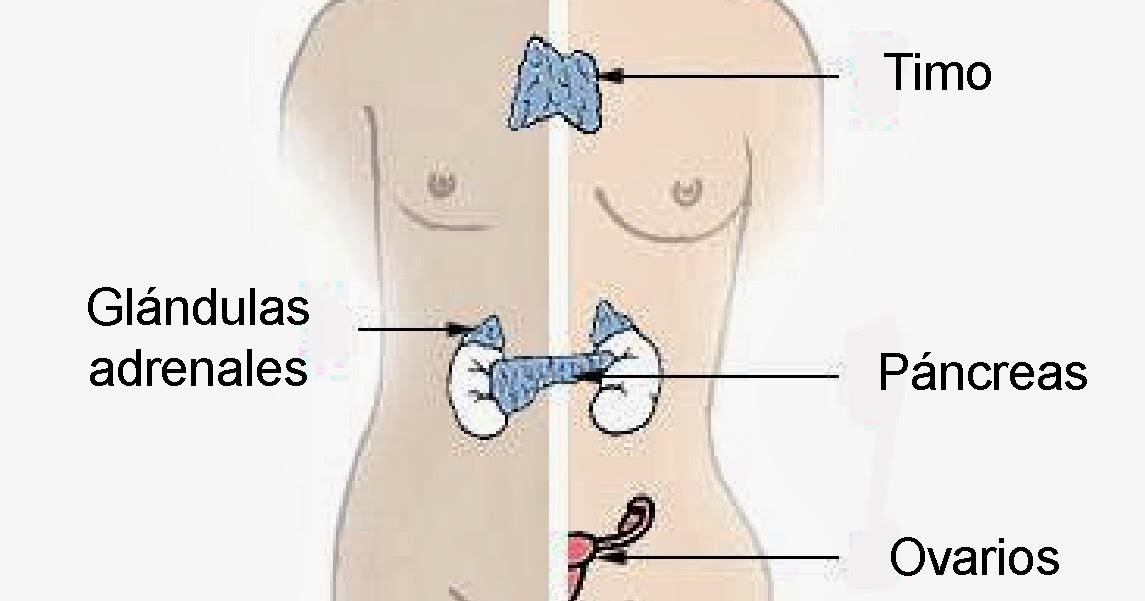 El Sistema Endocrino, Inmunológico y Los Sentidos. | Aportes