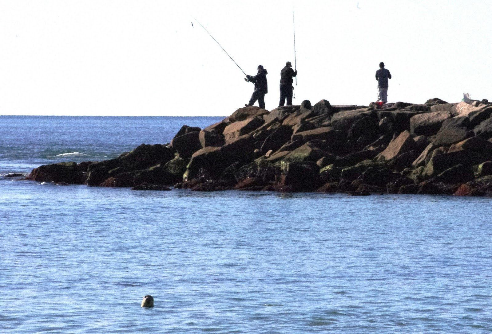 Progressive charlestown more scup less black sea bass for Rhode island saltwater fishing regulations