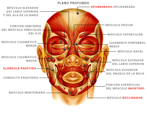 El dolor en los riñones de la parte izquierda que da en izquierdo los pies y la nalga