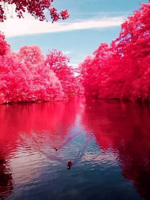 Cherry River,West Virginia,USA