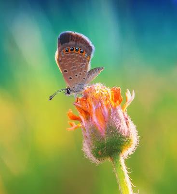 Una linda mariposa sobre una flor by Diens Silver
