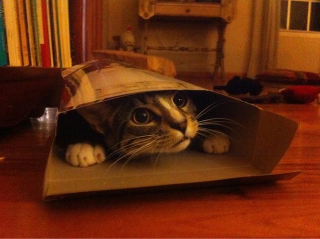 Divertidas imágenes de gatos tratando de entrar en pequeñas cajas, el número 7 es mi favorito