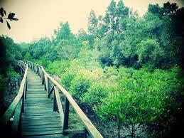 Hutan Bakau Mangrove Margomulyo Balikpapan