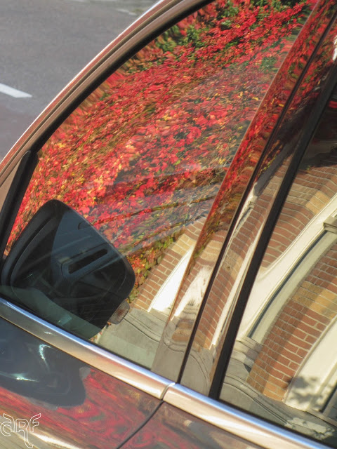 reflection of red ivy