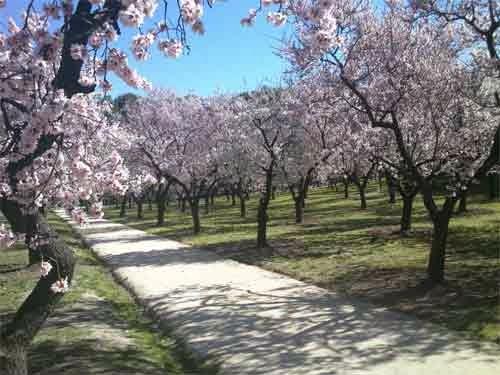 camino de almendros de Quinta de los Molinos