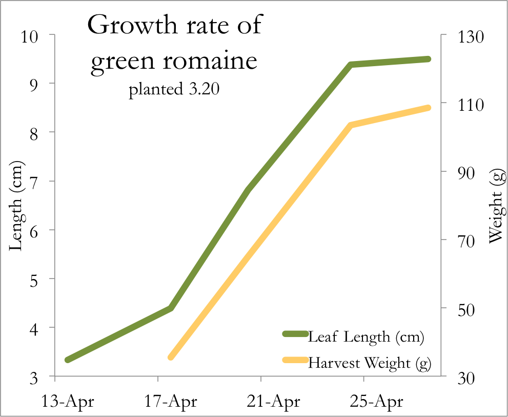 groth rates Is there an average growth rate with which to compare the pots w/ a 400 wtt mh i see a 2 to 2 1/2 inch groth a week during veg mygirls, jun 1, 2008 #3 kronicsmurf well-known member there are many strains and i'm sure they all grow at different rates depending on the care they are.