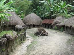 honai rumah suku adat suku dani