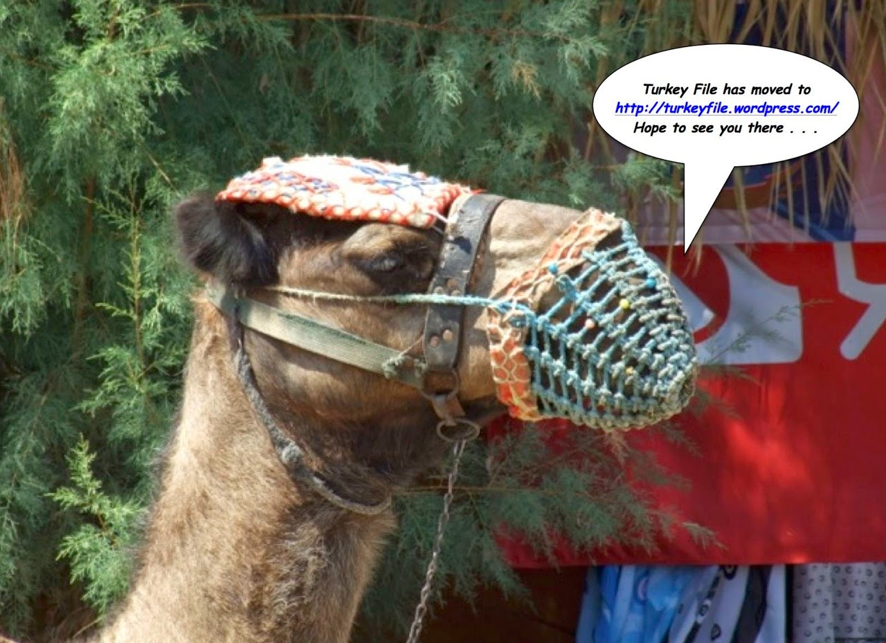 Camel greeting