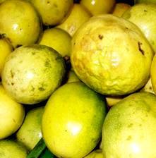 Foto de la Maracuyá amarilla