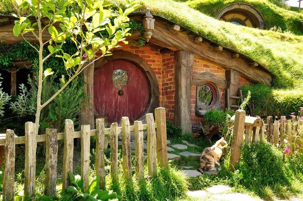 Cat From Hobbiton New Zealand Traveling Cats Travel