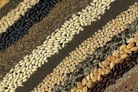 Στη φυλακή και βαριά πρόστιμα όποιος καλλιεργεί «παράνομους» σπόρους