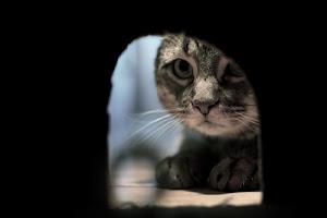 O Gato olhando o Buraco