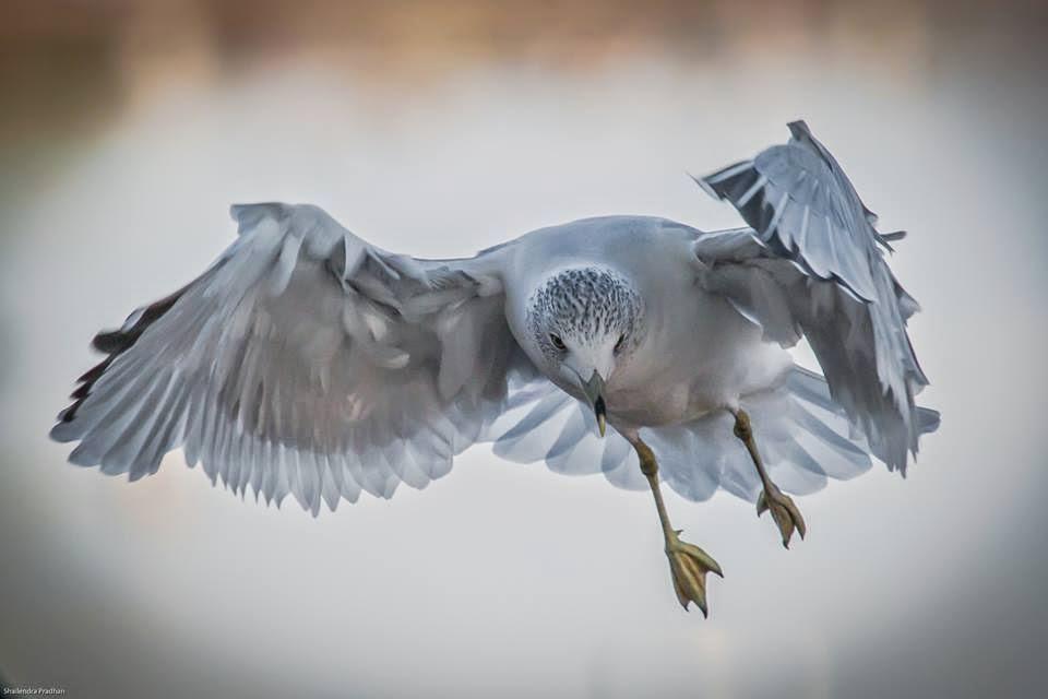 Voar...Voar...