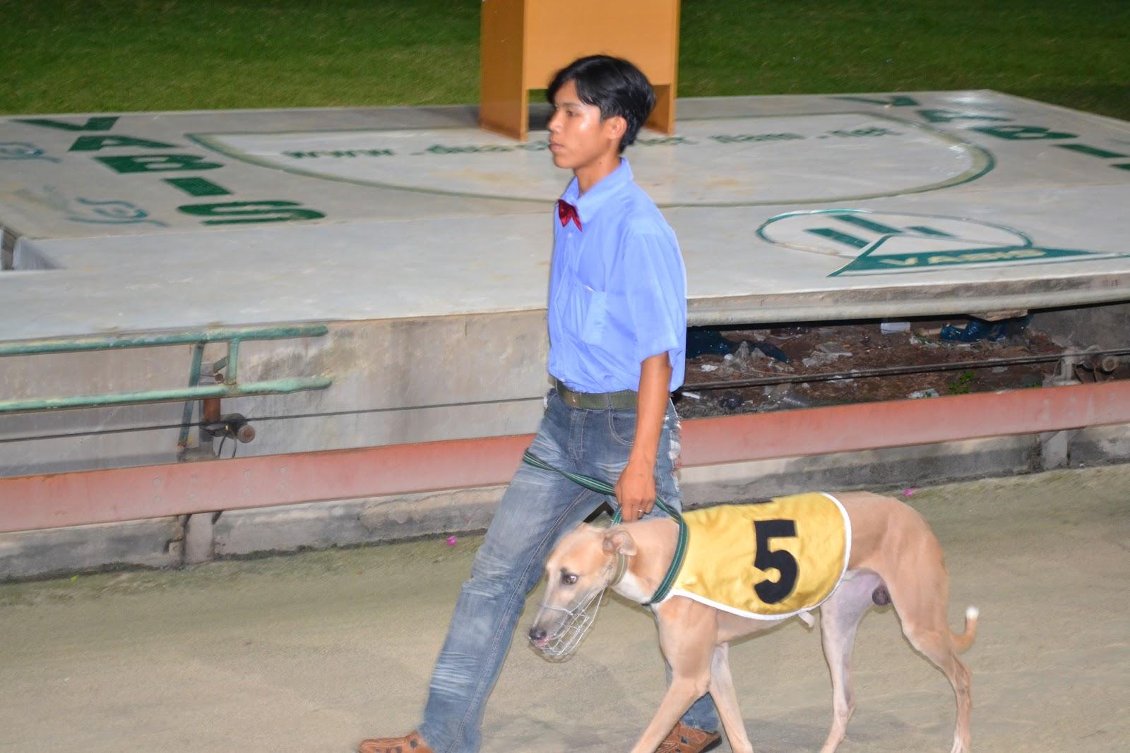 Heroes of Greyhound racing, Vung tau